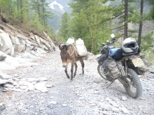 One donkey meeting another